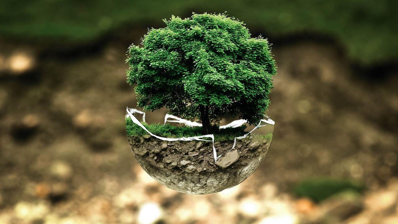 Jakie rośliny można hodować przez cały rok?